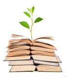 Green sprout growing from open books Stock Photography