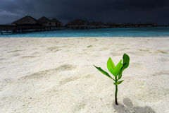 Green sprout growing out from sand. At tropical island Royalty Free Stock Photography
