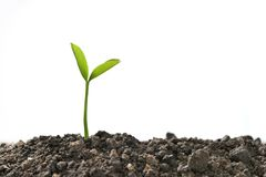 Green sprout growing out from soil Stock Image