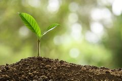 Green sprout growing out from soil on nature royalty free stock images