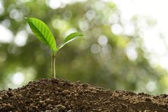Green sprout growing out from soil on nature royalty free stock photography