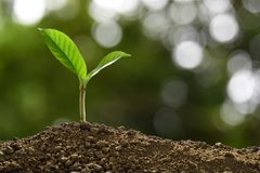 Green sprout growing out from soil on nature stock photo
