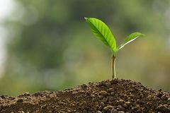 Green sprout growing out from soil on nature royalty free stock image
