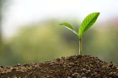 Green sprout growing out from soil on nature royalty free stock photo