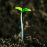 Green Sprout Growing From Seed Royalty Free Stock Photo
