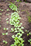 Green sprout growing from seed Stock Images