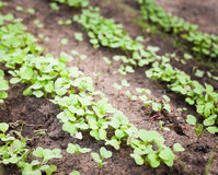 Green sprout growing from seed Stock Photography