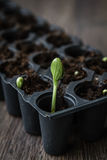 Green Sprout Growing Stock Image
