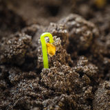 Green sprout growing from seed Stock Photos