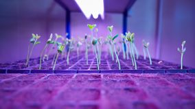 Green sprout growing from seed in square boxes. Symbol of new life. Shallow dof stock images
