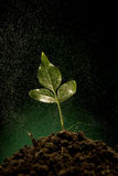 Green sprout growing from soil Royalty Free Stock Images