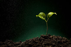 Green sprout growing from soil Royalty Free Stock Photo