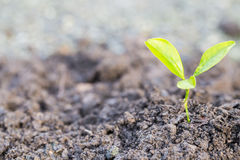 Green sprout growing Stock Images