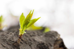 Green sprout growing from tree Stock Photo