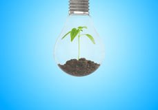 Green sprout grows of the ground in light bulb on blue background Stock Images