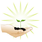 Green sprout in a hand. Spring green sprout and clod of earth in a hand of the man Royalty Free Stock Images