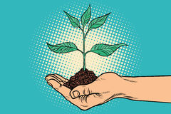 Green sprout in hand royalty free illustration