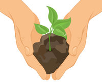 Green sprout in hands. Vector illustration of a green sprout in hands Stock Image