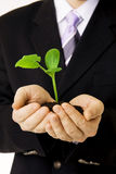 Green Sprout In Hands Royalty Free Stock Photography