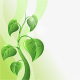 Green sprout with leaves and copyspace for your Royalty Free Stock Photos