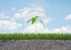 Green sprout in light bulb grows from grass on ground with small stones. Royalty Free Stock Images