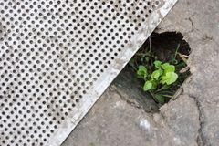 A green sprout makes its way through a hole in cardboard or metal. The concept of environmental protection. The concept of will an royalty free stock photos