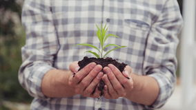 Green sprout in man hands. Care and grow concept stock video footage