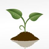 Green sprout. Picture of a green sprout in a fistful of soil, vector eps10 illustration Royalty Free Stock Photos