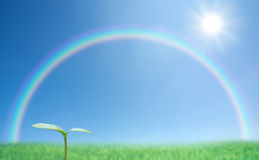 Green sprout and rainbow Stock Images