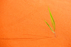 Green sprout in the sandy desert.Background of sand. royalty free stock photos