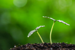 Green sprout seed Stock Image