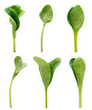 Green sprout set isolated Royalty Free Stock Image