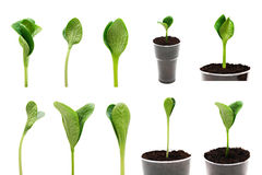 Green sprout set isolated Stock Photos