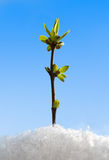 Green sprout in snow Stock Photo