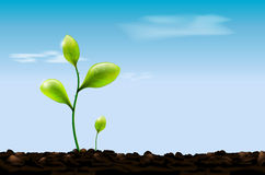 Green sprout , soil and blue sky with clouds Royalty Free Stock Photography