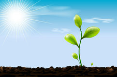 Green sprout, soil and blue sky with sun Royalty Free Stock Photo