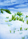 Green sprout on the strong sun with ice and snow Stock Image