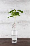 Green sprout suspended in the air - sustainable living concept. Stock Image
