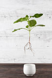 Green sprout suspended in the air - sustainable living concept. Royalty Free Stock Images