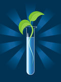 Green sprout from the test tube Royalty Free Stock Photo