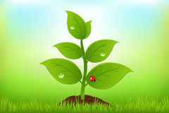 Green Sprout. Vector Royalty Free Stock Photography
