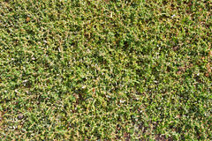 Green sprouting green grass Stock Photo