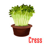 Green sprouts of cress salad cartoon icon Royalty Free Stock Images