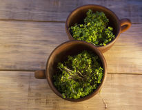 Green sprouts seeds in a brown ceramic cup 2 Royalty Free Stock Photography