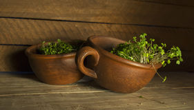 Green sprouts seeds in a brown ceramic cup 4 Royalty Free Stock Images