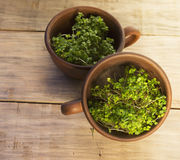 Green sprouts seeds in a brown ceramic cup 3 Royalty Free Stock Images