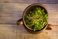 Green sprouts seeds in a brown ceramic cup 3 Stock Images