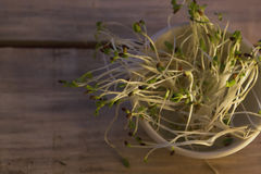 Green sprouts seeds in a white ceramic cup Stock Image