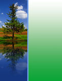 Green spruce. Against the blue sky in a field near the forest with mirror and space for text Royalty Free Stock Photos