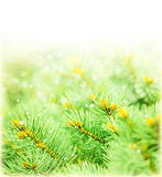 Green spruce border Royalty Free Stock Photos